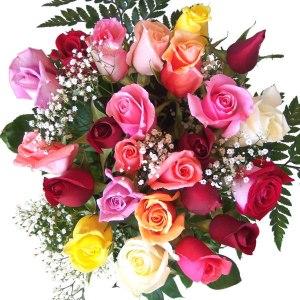 trandafiri_multicolori