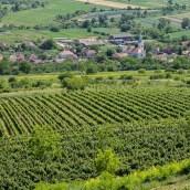 villa-vinea-IMG-53511