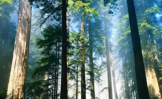 poza copaci.jpg
