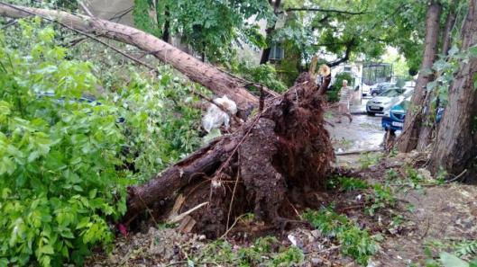 o-batrana-din-maramures-a-murit-strivita-de-un-copac-smuls-din-radacini-de-furtuna-18487261.jpg