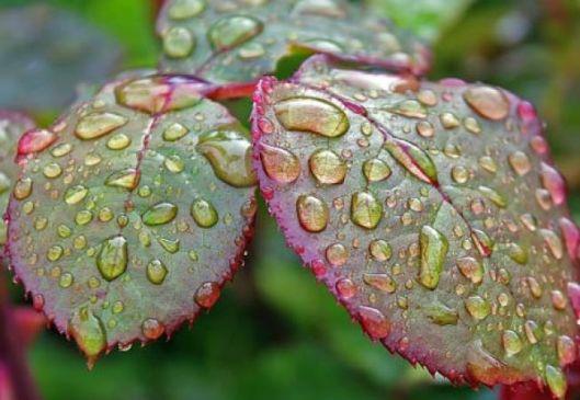 652x450_077412-ce-facem-cand-ploua-prea-mult-in-gradina.jpg
