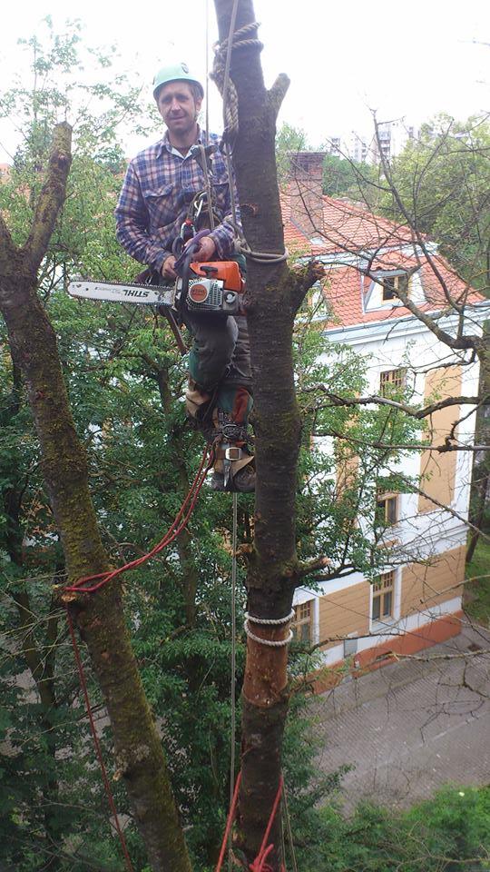 La tăiat de copaci periculosi.jpg